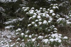 Dots of new snow stock image