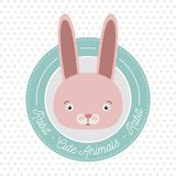 Dotted background with color frame decorative and face rabbit cute animal text. Vector illustration Royalty Free Stock Image