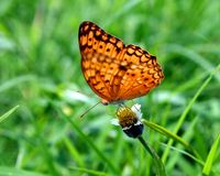 Dotted Butterfly Royalty Free Stock Images