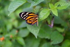 Dotted butterfly Royalty Free Stock Photos
