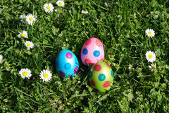 Dotted easter eggs and daisy flowers in grass meadow Royalty Free Stock Image