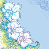 Dotted moth Orchid or Phalaenopsis with decorative lace in pastel colors on the blue background. Royalty Free Stock Photos