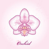 Dotted moth Orchid or Phalaenopsis on the pink textured background with blots in pastel colors. Stock Images