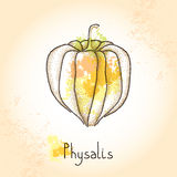 Dotted Physalis or Cape gooseberry on the textured beige background Royalty Free Stock Image