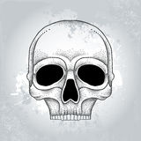 Dotted skull in black on the textured gray background Royalty Free Stock Photography