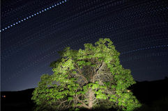 Dotted Star Trails Royalty Free Stock Photography