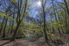 Dottinkrade forest near Winterswijk royalty free stock images