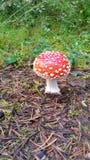 Dotty гриб в forrest Стоковое Изображение RF