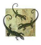 Dotwork do lagarto do desenho da mão Imagens de Stock Royalty Free