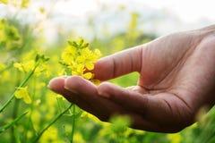 Dotyk kwiat zdjęcie stock