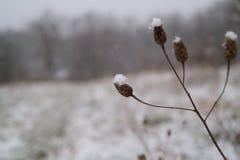 Dotyki śnieg Zdjęcia Royalty Free