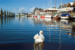 Douarnenez in brittany Stock Image