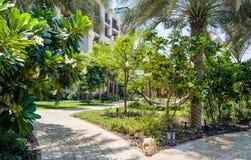 doubai De zomer van 2016 Een groene oase die het Vier Seizoenenhotel Jumeirah overzien royalty-vrije stock fotografie