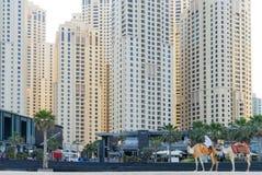 Doubai - Januari 25: Sluit omhoog van bedouin, berijdend een kameel vooraan Royalty-vrije Stock Afbeeldingen