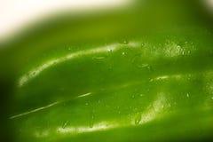DOUBAI-VERENIGD ARABISCHE EMIRATEN OP 21 JUNI 2017 Close-upmening van Groene groene paprika's natuurlijke achtergrond Royalty-vrije Stock Foto's