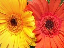 Double beauté Image libre de droits