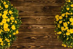 Double border of colorful yellow Mums Stock Images