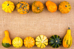 Double border of ornamental fall pumpkins Royalty Free Stock Photo