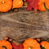 Double border of pumpkins, gourds and leaves against wood. Autumn double border of pumpkins, gourds and leaves against a rustic old wood background Royalty Free Stock Images