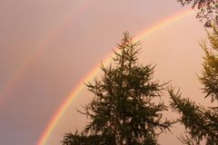 Double Bright Rainbow With A Stormy Sky. A bright double rainbow with tree`s on the foreground. A gray-pinkish tone for the sky shows the warmth yet ominous stock photos