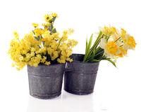 Double-Bucket Yellow Royalty Free Stock Images