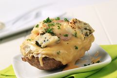 Double cheese twice baked potato. Sprinkled with parsley Royalty Free Stock Image