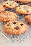 Double chocolate chip cookies Royalty Free Stock Images