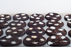 Double chocolate chip mallows. Freshly baked double chocolate chip mallows Royalty Free Stock Photography