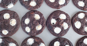 Double chocolate chip mallows. Freshly baked double chocolate chip mallows Stock Image