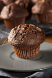 Double Chocolate Chip Muffin. Pastry for Breakfast Royalty Free Stock Photography