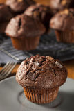 Double Chocolate Chip Muffin Royalty Free Stock Photos