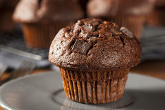 Double Chocolate Chip Muffin. Pastry for Breakfast Stock Photography