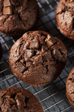 Double Chocolate Chip Muffin Stock Images