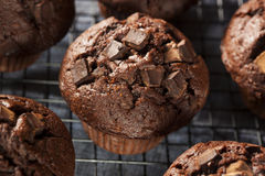 Double Chocolate Chip Muffin Stock Photos
