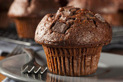 Double Chocolate Chip Muffin. Pastry for Breakfast Royalty Free Stock Photo