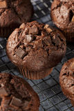 Double Chocolate Chip Muffin Royalty Free Stock Photography