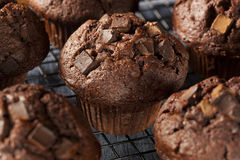 Double Chocolate Chip Muffin Stock Photo
