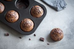 Double Chocolate Muffins Royalty Free Stock Photos