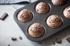 Double Chocolate Muffins Royalty Free Stock Photography