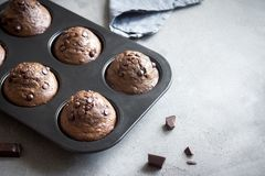 Double Chocolate Muffins Stock Image