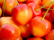 Double color cherries. Close-up of ripe double color cherries Stock Photography