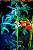 Double color plants. Flower in warm and cold color correction Royalty Free Stock Photo