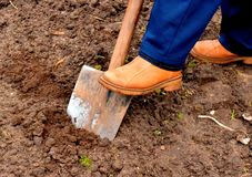 Double-digging the garden bed. stock images