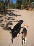 Double Dog Walk Stock Image