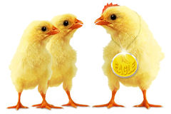 Double eagle. Episode with chickens Royalty Free Stock Photography