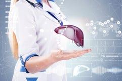 Double exposition Docteur avec le stéthoscope et le foie sur les mains dans un hôpital Image stock