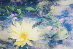 Double exposure - abstract lotus flower in the sky, Metaphors tranquility from yoga by meditation to purify mind,With concept of vector illustration