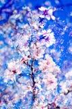 Double exposure of almond trees Stock Photo
