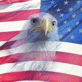 Double exposure of bald eagle on american flag. Double exposure effect of north american bald eagle on american flag royalty free stock photography