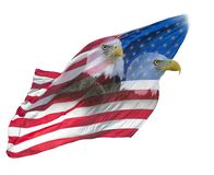Double exposure of bald eagles on american flag. Double exposure effect of north american bald eagles on american flag royalty free stock image